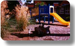 preschool-natural-playground